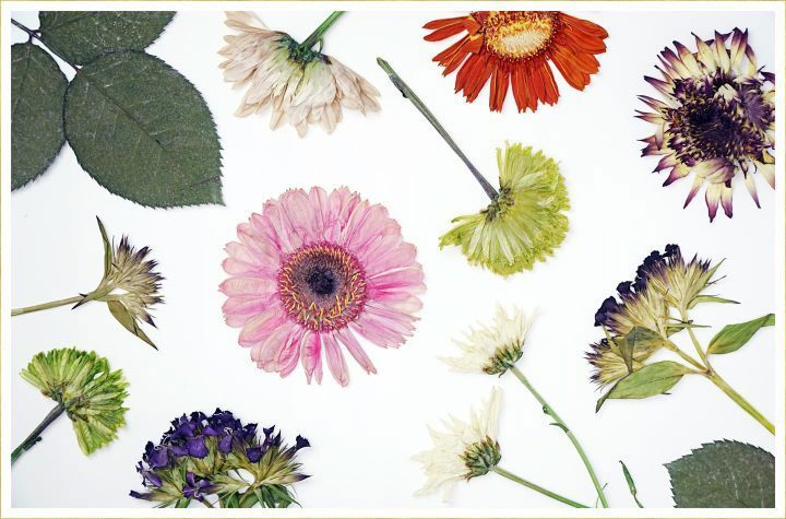 overhead view of pressed flowers.